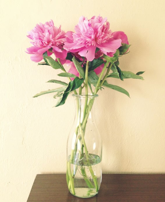 Peonies // A Cozy Kitchen