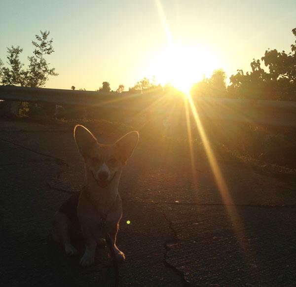 Amelia in Echo Park
